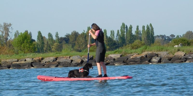 CaniSUP/Cani-Paddle, loisir canin aquatique stand up paddle avec mon chien