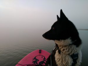 CaniSUP/Cani-Paddle, loisir canin aquatique, stand up paddle avec mon chien