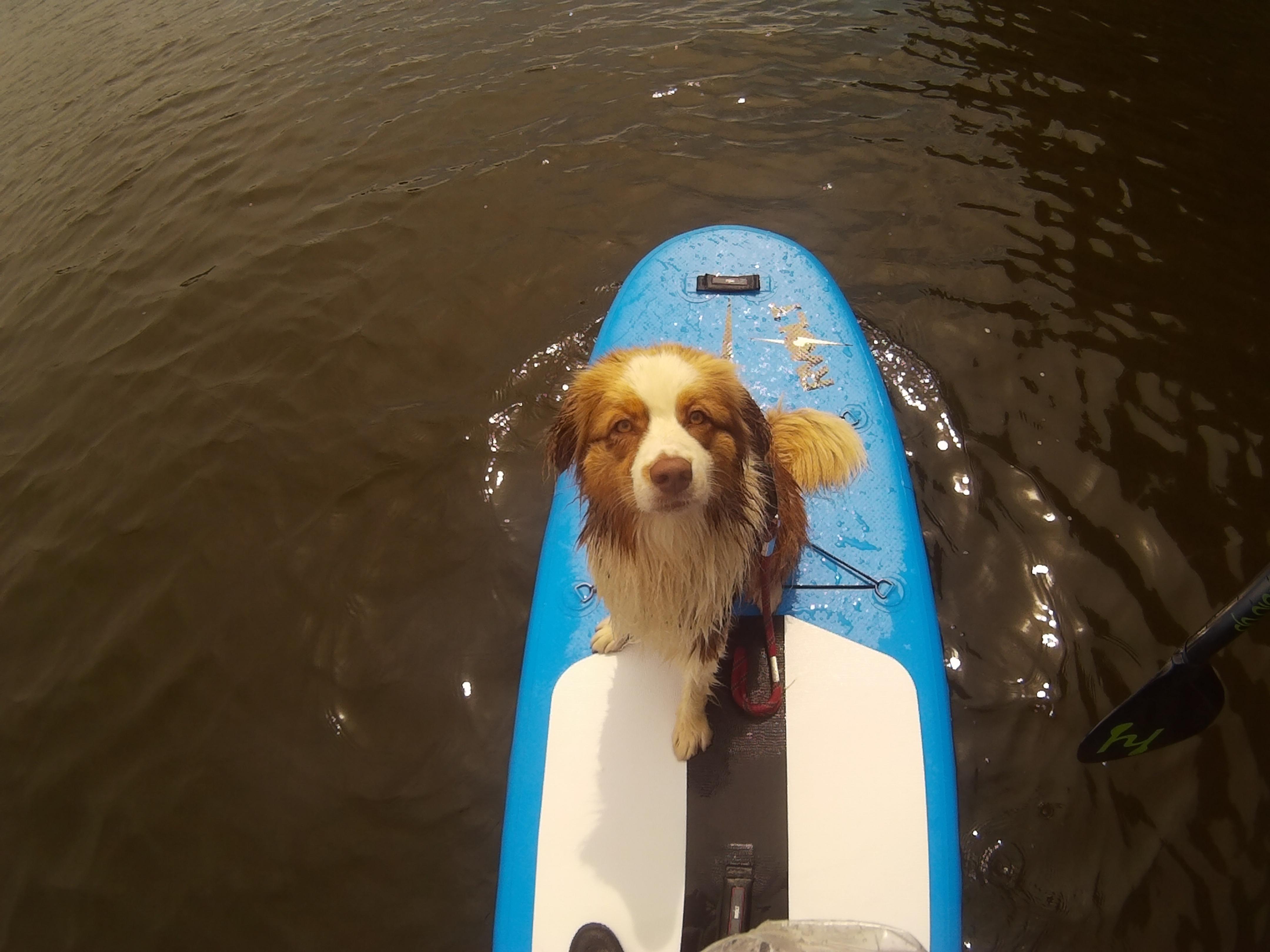 Miel, SUPer Dog Trotter